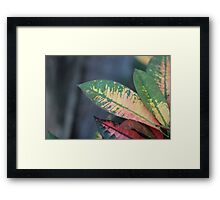 Colorful Nature  Framed Print