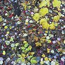 Leaf litter in the rain by nealbarnett