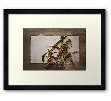Autumn didn't want to be framed.......  Framed Print