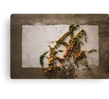 Autumn didn't want to be framed.......  Canvas Print