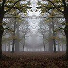 Mirror Wood by imagejournal