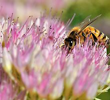 So Work the Honey-Bees by Graeme Nix