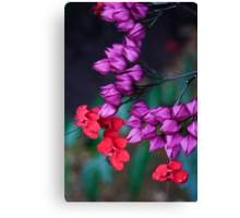 Floral Remedy Canvas Print