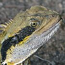 Very Senior Male Water Dragon by stevealder