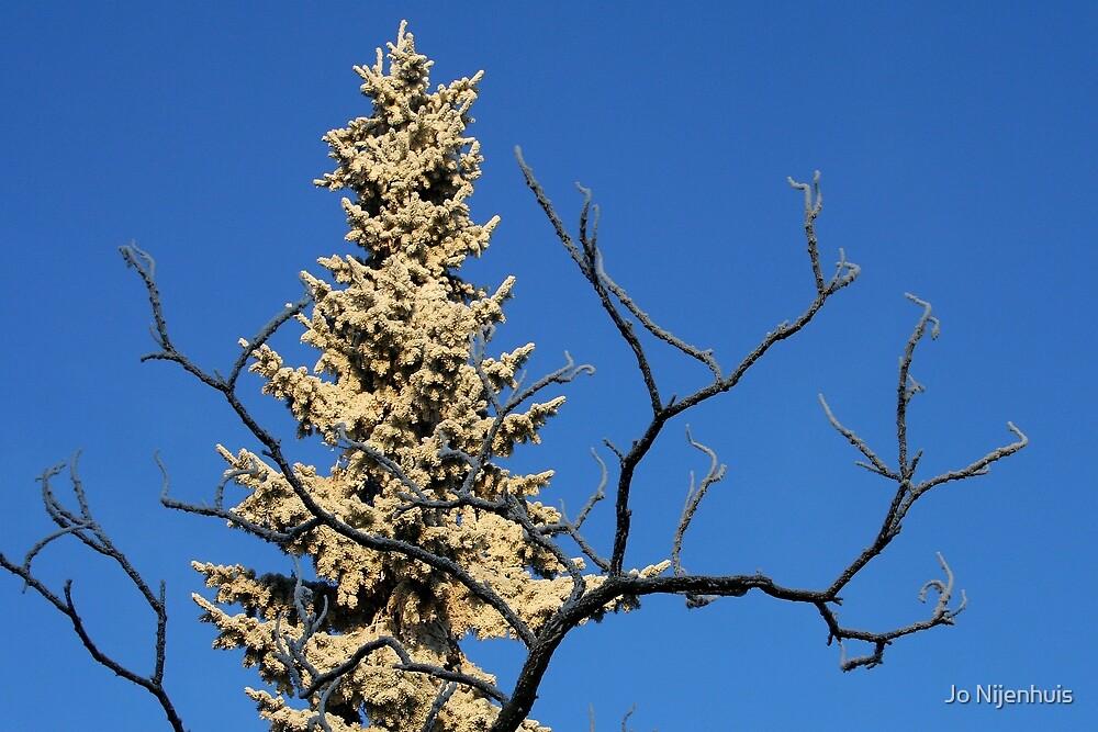 Stillness of Winter by Jo Nijenhuis