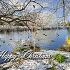 Card - Wintry River at Newton Road Park  by Rod Johnson