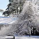 Bright sunny snow covered trees by Penny Rinker