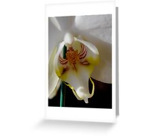 macro orchid Greeting Card