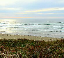 A Seagulls View...Yachats, Oregon by trueblvr