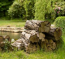 Woodpile by DiverDeb