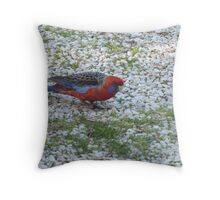 Adelaide Rosella feeling wary, garden path, Adelaide Hills. Throw Pillow