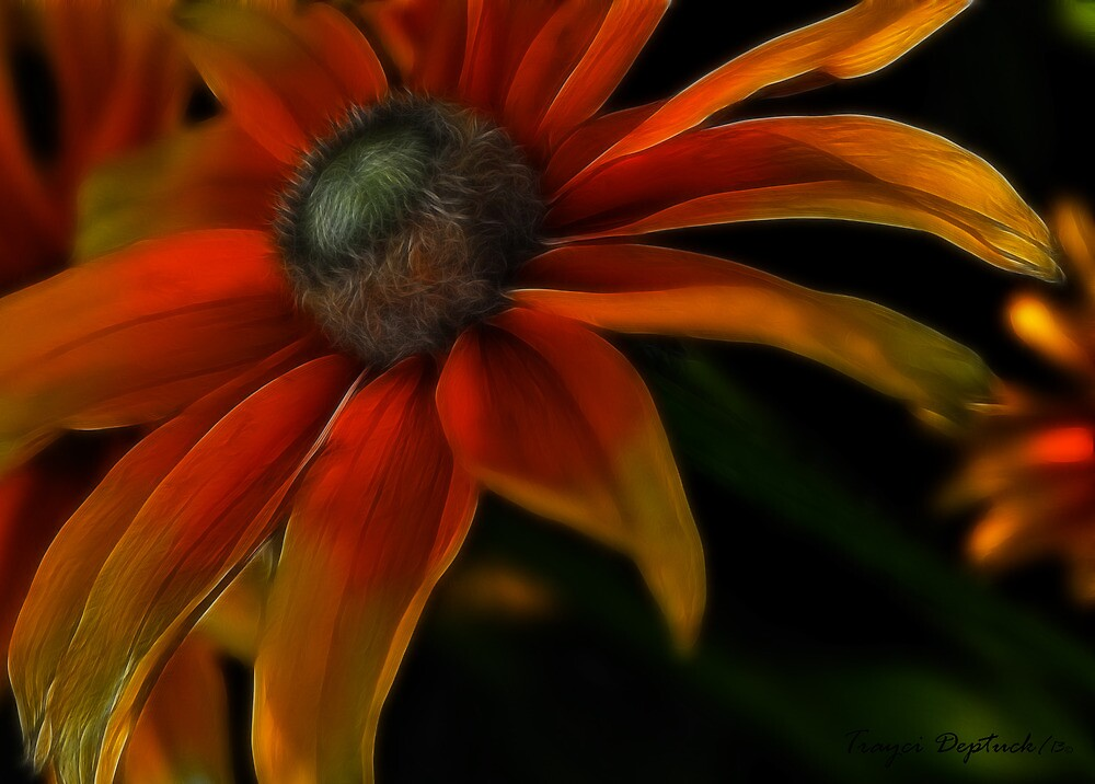 Candycorn Burst by Creative Captures