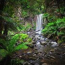 Lushness of the Rain Forest by Jill Fisher