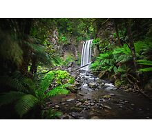 Lushness of the Rain Forest Photographic Print