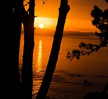 Sunrise in Auckland by yurix
