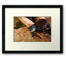 Little Otter Guy Framed Print