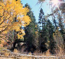 Aspen Grove by Rosalee Lustig