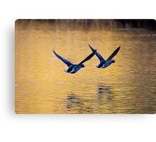 Mallard Ducks Skimming Across Autumn Lake Canvas Print