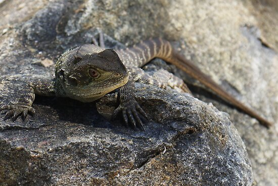 lizard 2 by 10naruto23