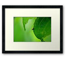 Leaf Beetle Framed Print