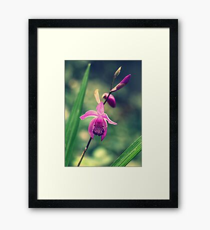 Purple Frilly Orchid Framed Print