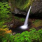 Ponytail Falls I by Tula Top