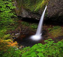 Ponytail Falls I by Tula Top