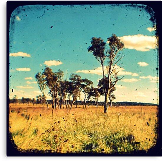 Eucalyptus Trees Through The Viewfinder (TTV) by Kitsmumma