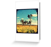 Eucalyptus Trees Through The Viewfinder (TTV) Greeting Card