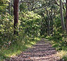 Coastal bush track by Timothy John Keegan