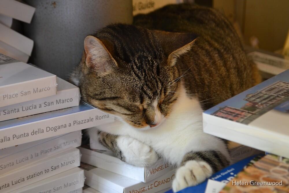 Bookshop Cat by Helen Greenwood