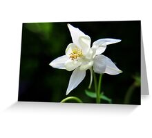 White Columbine Flower Greeting Card