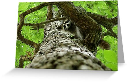 Taking Tree Climbing to the Next Level by Jean Gregory  Evans