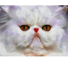 white cat Photographic Print