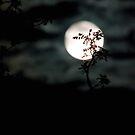 Soft Moon by jude walton