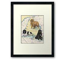 Newfoundland Dog Trio Cathy Peek Animal Art Framed Print