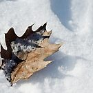 Winter by jude walton