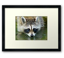Drink Or Wade?  Both! Framed Print