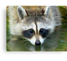 Drink Or Wade?  Both! Canvas Print