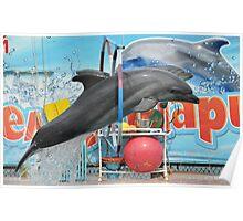 Dolphinarium in Anapa Poster