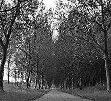 Texels...Rue calme bordée par des arbres by Alessiocorner