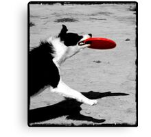 Dog Frisbee Canvas Print