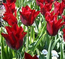 Glowing Red Tulips by KayEeGee