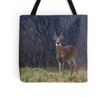 Young Buck in Snow Tote Bag