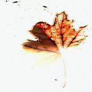 Tree Dust  by ArtbyDigman