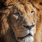 Leo by Steve Randall