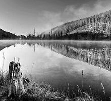North Lake Stump by Marty Straub