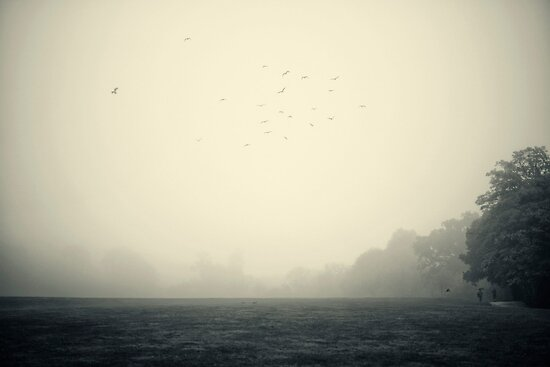 Misty morning 2 by Trish  Anderson