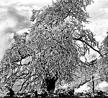 Winter's Embrace by Rhonda Strickland