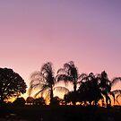 Sunset in Deer Creek, Davenport, FL by Debbie Robbins